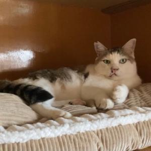 新しいペットベッドに大喜びの猫たち