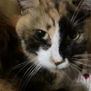 動物保護団体やボラが激少ない東北の野良猫が激増しない理由を推測
