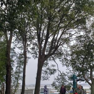 薪オフ 春の樫祭り参加