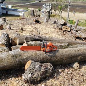 樫原木頂きました♪