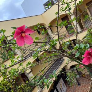 メキシコ紀行♡〜花たち植物たちからの癒し〜