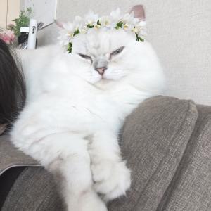 スノーの猫ちゃんモード発動!