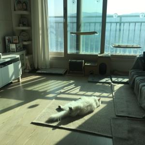 韓国ソウル 日韓夫婦ハウス ホームステイ申請書