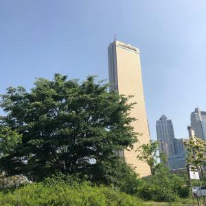 韓国ソウル♡63ビルディング最上階でランチ