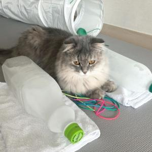 猫ちゃん熱中症対策!
