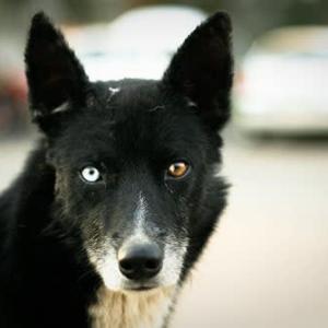 治療師か詐欺師か(1)犬の目