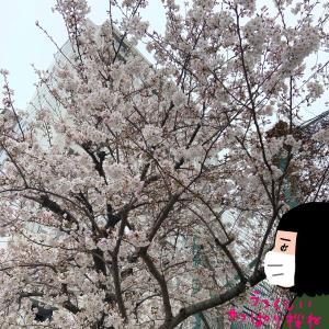 春は桜と明日葉で元気に