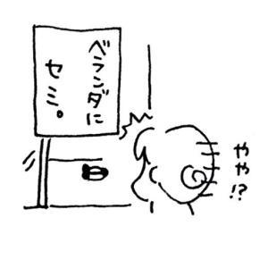 夏の終わり~セミ爆弾