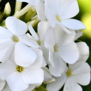 花シリーズ・毎日毎日咲花