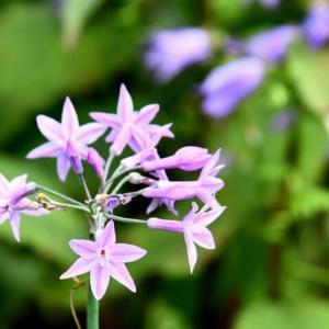 華花逍遥(95)・秋色も だんだん濃くなる 花の喜び