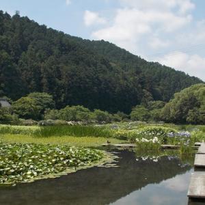 美しい原風景加茂菖蒲園