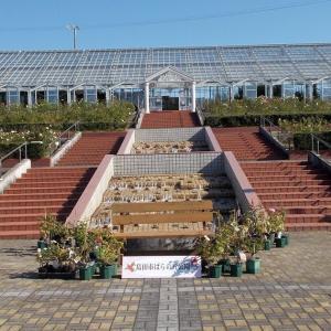 君にバラバラ「島田市バラの丘公園」
