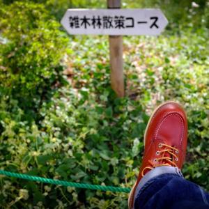 雑木林散策コース。