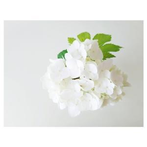 最近のお花たち♡