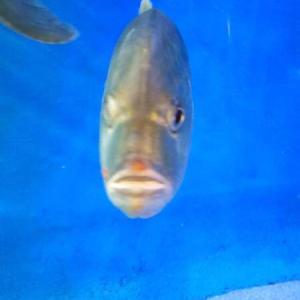 スターがいなくても、大ブレイク中の水族館