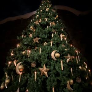 ハリポタエリアのクリスマスツリー 2019年11月