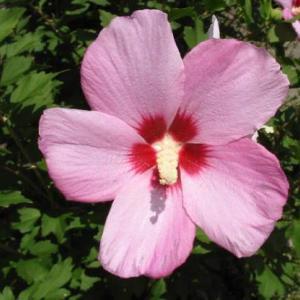 梅雨に咲く花と乾燥やシワに負けないスキンケアクリーム