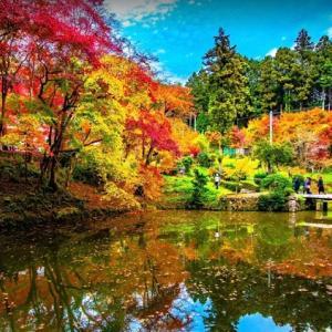 紅葉の季節はもうすぐです
