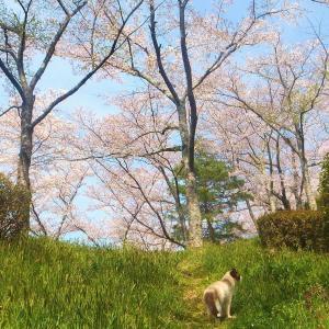 春の猫たち