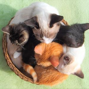 外部寄生虫と猫~その1