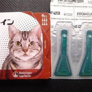外部寄生虫と猫〜その2
