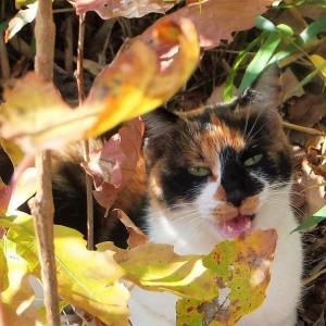 令和最初の迷い猫