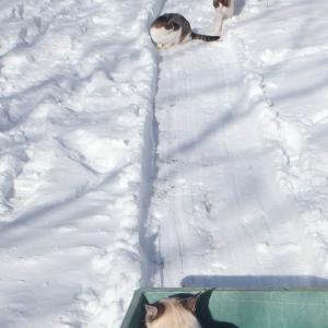 雪の朝と猫~1月