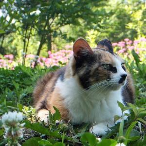 猫と毛虫の楽園(その後)