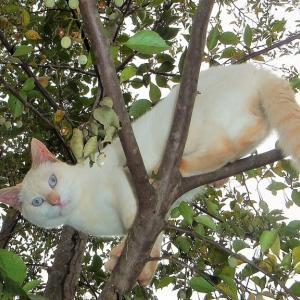 猫とヤマガラ