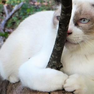 好奇心は猫を殺した