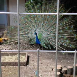 智光山公園こども動物園へ