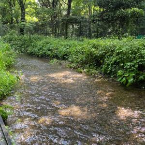 智光山公園 2