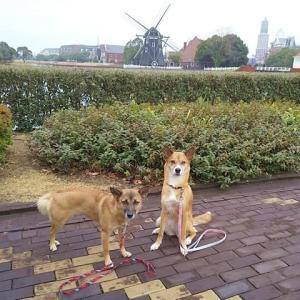 令和年末年始、犬連れの旅。3日目「ハウステンボス・フォレストヴィラ」