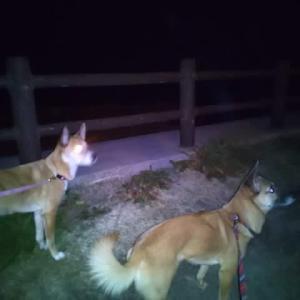令和年末年始、犬連れの旅。8日目「帰りま~す!」