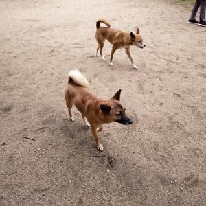 犬連れ女子旅ラハイナ2020 1日目