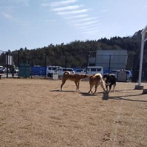 福井県小浜へ車中泊の旅。