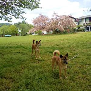 和歌山と泉南をハシゴ散歩。