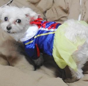 白雪姫に変身したココでしゅよ~!