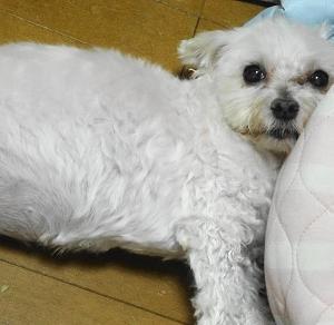 ココとバニラの家の子記念日でしゅよ~!
