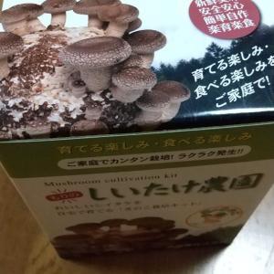 椎茸の 栽培…