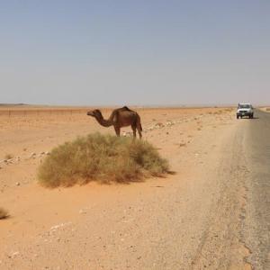 「アルジェリア」編 エル・ゴレア~ティミムーン サハラ砂漠6