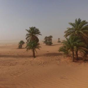 「アルジェリア」編 ティミムーン9 サハラ砂漠8