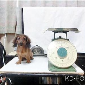カニンヘンダックス動画 アコちゃん生後4か月体重測定