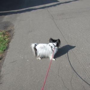 散歩いっぱいとサーモンオイルを続けた結果