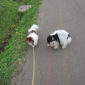 スローな散歩