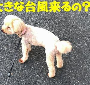 台風さんどっか行って