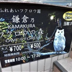 鎌倉フクロウの森に行って見た