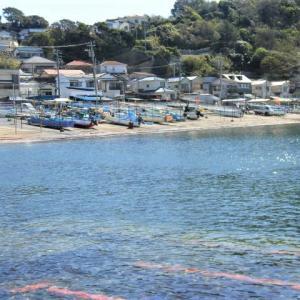 小坪漁港の魚屋と光明寺の桜