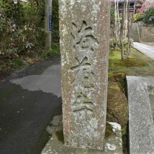 春の海蔵寺