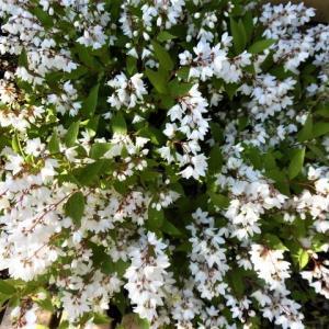 鎌倉中央公園と蜂の巣